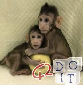 第一只猴子用多利羊技术克隆, 克隆的猴子, 克隆,中国,技术,cloned monkey,