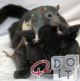 eliminate mice