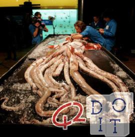 calamaro gigante, Giant Squid, 巨大イカ, 巨型鱿鱼, calamar gigante, calmar géant, lula gigante, 거대한 오징어, பெரிய ஸ்க்விட்,