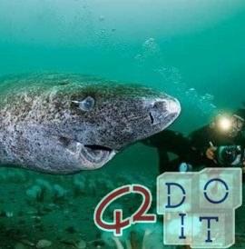 animal más viejo del mundo tiene 400 años, es el tiburón de Groenlandia