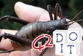 Weta, одно из крупнейших насекомых на планете