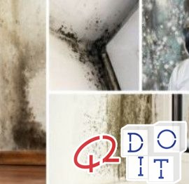 Mold: how to eliminate it from the walls, with natural remedies