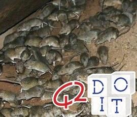 Мыши, жизнь, размножение, мозг,