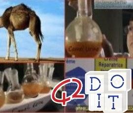 terapia, urina, cammello, controindicazioni, esperimenti, ricerca,
